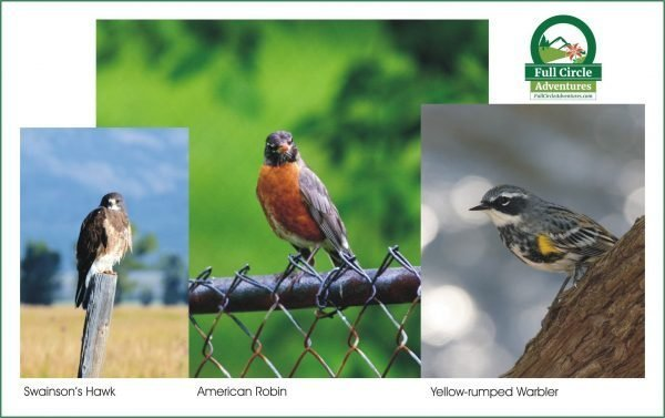 May Birds 2019 FCA Newsletter